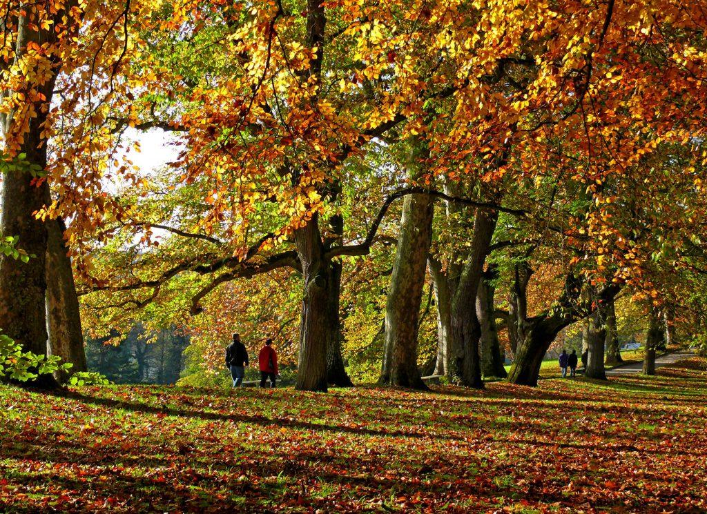 Canva – Autumn, Park, Avenue, Fall Leaves, Leaves, Trees